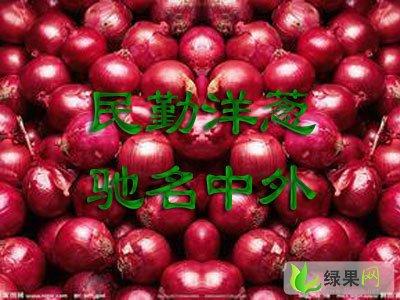 供应:甘肃民勤红皮洋葱
